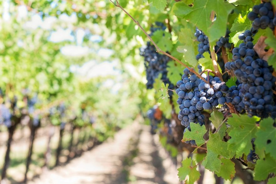 How is Wine Made? A Brief Overview of the Wine-Making Process